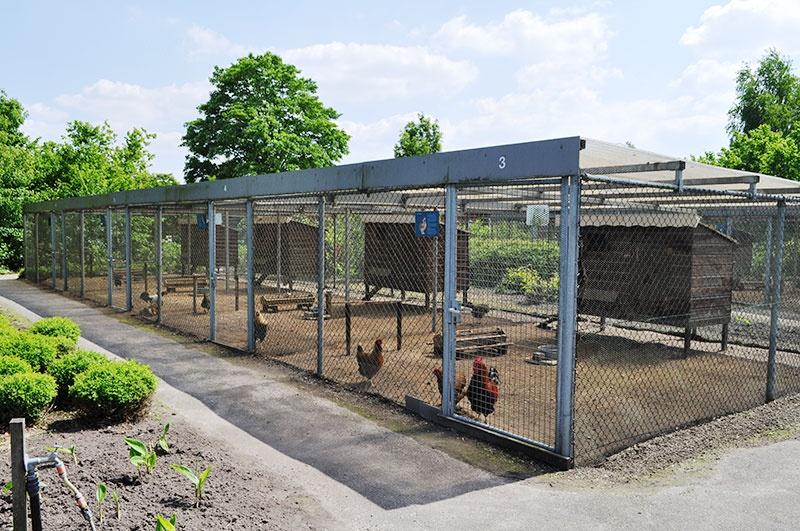 Nieuwe toom Twentse Hoenders in Pluimveemuseum Barneveld